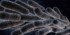 Campilobacterioza